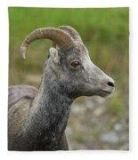 Stone's Sheep Fleece Blanket