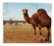 Large Beautiful Camel Fleece Blanket