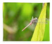 Small Beautiful Dragonfly Fleece Blanket