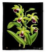 Vintage Orchid Print On Black Paperboard Fleece Blanket