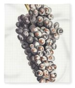 A Bunch Of Grapes By Johan Teyler  1648-1709  Fleece Blanket