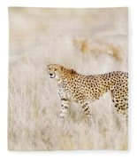 A Pair Of Cheetahs Move Steathily Through The Long Grass Of The  Fleece Blanket