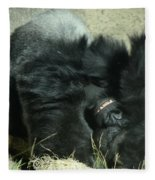 Adult Silverback Gorilla Laying Down With Anguished Expression Fleece Blanket