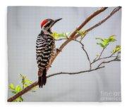 Arizona Ladderback Woodpecker Fleece Blanket