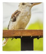 Australian Kookaburra Fleece Blanket