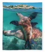 Australian Sea Lion Pair, Coral Coast Fleece Blanket