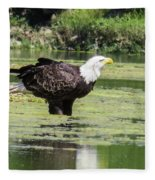 Bald Eagle's Look Fleece Blanket