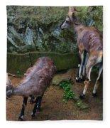 Beautiful Horns Fleece Blanket
