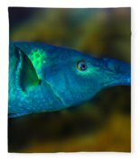 Bird Wrasse Fleece Blanket