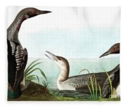Black Throated Diver, Colymbus Arcticus By Audubon Fleece Blanket