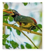 Chestnut-eared Araacari Fleece Blanket