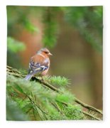 Common Chaffinch Fringilla Coelebs Fleece Blanket