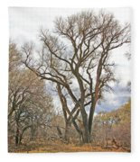 Cottonwood Az Bayou Leafless Tree Sky Clouds Path 31262019  Fleece Blanket