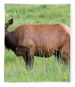 Cow Elk Grazing Fleece Blanket