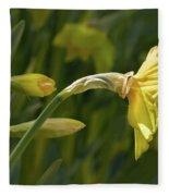 Daffodil In Sun Fleece Blanket