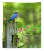 Eastern Bluebird Fleece Blanket