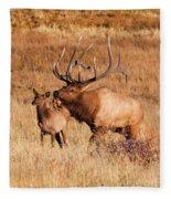 Elk And Mate In Rocky Mountain Meadow Fleece Blanket