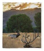 Elk Sunset Fleece Blanket