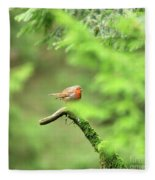 English Robin Erithacus Rubecula Fleece Blanket