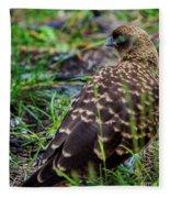 Falcon Chimango Caracara, Tierra Del Fuego National Park, Ushuaia, Argentina Fleece Blanket