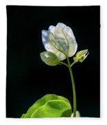 flowers of a Bougainvillea w4 Fleece Blanket