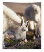 Grazing On Mount Evans Fleece Blanket