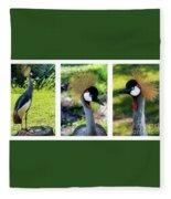 Grey Crowned Crane Gulf Shores Al Collage 6 Triptych Fleece Blanket
