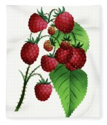 Hepstine Raspberries Hanging From A Branch Fleece Blanket