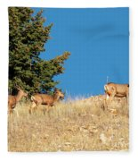 Herd Of Colorado Deer Fleece Blanket