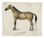 Horse  Equus Ferus Caballus  Illustrated By Charles Dessalines D' Orbigny  1806-1876  Fleece Blanket
