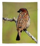 House Sparrow V1818 Fleece Blanket