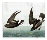 Least Stormy Petrel, Thalassidroma Pelagica By Audubon Fleece Blanket