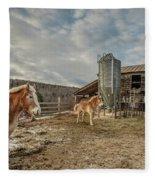 Morgan Horses Pomfret Vermont Fleece Blanket