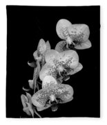 Phalaenopsis Orchids Black And White Fleece Blanket