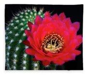 Red Hot Torch Cactus  Fleece Blanket