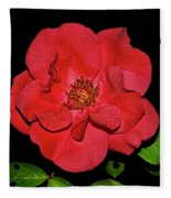 Red Rose With Dewdrops 038 Fleece Blanket