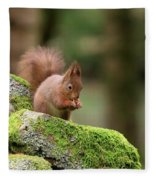 Red Squirrel Sciurus Vulgaris Eating A Seed On A Stone Wall Fleece Blanket