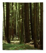 Redwood Trees Armstrong Redwoods St Fleece Blanket