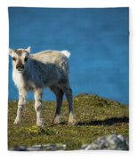 Reindeer Grazing In Spitzbergen Fleece Blanket