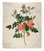 Rosa Rubiginosa Fleece Blanket