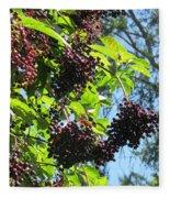 Sambucus Elderberry Sureau Fleece Blanket