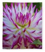 Semicactus Dahlia Fleece Blanket