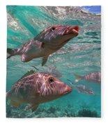 Snapper On Ningaloo Reef, Australia Fleece Blanket