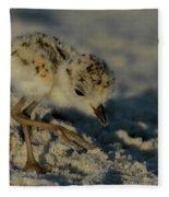 Snowy Plover On The Hunt Fleece Blanket