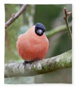 So. Bullfinch Fleece Blanket