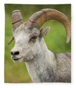 Stone's Sheep Ram Portrait Fleece Blanket