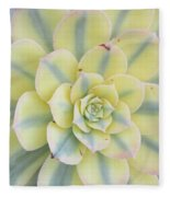 Succulent Aeonium Sunburst Fleece Blanket