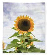 Sunflower Days Fleece Blanket