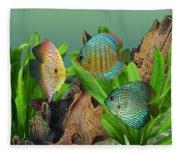 Three Discus Fish Fleece Blanket