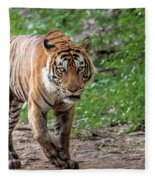 Tiger On A Stroll Fleece Blanket